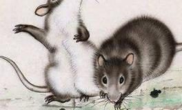 属鼠人一周运势全面解读(10.21-10.27)