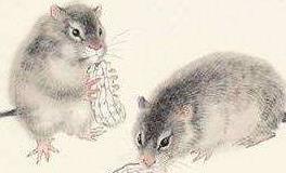 说话喜欢说一半的生肖鼠,好像揍他